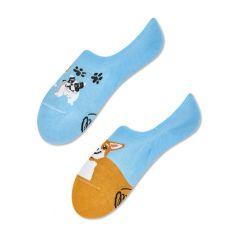 footies playful dog