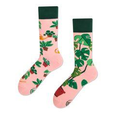 plant lover roze